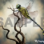 Cartoon Dragon Fly